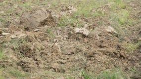 Agricolo prepari il concetto del campo dell'azienda agricola dell'attrezzatura del suolo Immagini Stock