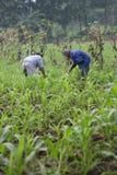 Agricoltore Immagini Stock Libere da Diritti