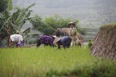 Agricoltore Fotografia Stock Libera da Diritti