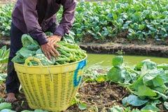 Agricoltore Fotografia Stock