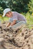 Agricoltore adolescente alla raccolta degli ortaggi a radici fotografie stock