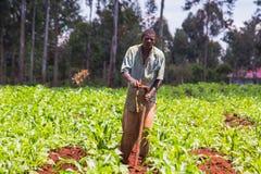 Agricoltore africano Weeding Immagini Stock