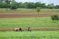 Agricoltore africano - Zambia fotografia stock