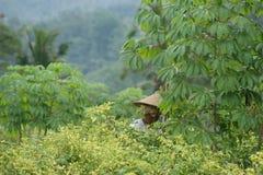 Agricoltore al giacimento del pepe - scena tipica della via di balinese Fotografia Stock Libera da Diritti