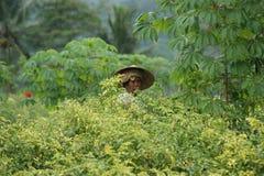 Agricoltore al giacimento del pepe - scena tipica della via di balinese Immagini Stock