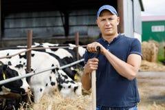 Agricoltore all'azienda agricola con le mucche da latte Fotografie Stock
