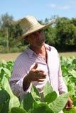 Agricoltore alla piantagione del sigaro nella zona rurale di Cuba Fotografia Stock Libera da Diritti
