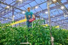 Agricoltore amichevole che lavora alla piattaforma idraulica dell'elevatore a forbice nel g Fotografia Stock