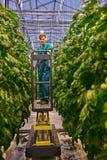 Agricoltore amichevole che lavora alla piattaforma idraulica dell'elevatore a forbice nel g Fotografia Stock Libera da Diritti