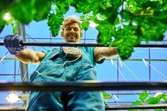 Agricoltore amichevole che lavora alla piattaforma idraulica dell'elevatore a forbice in serra Fotografia Stock Libera da Diritti