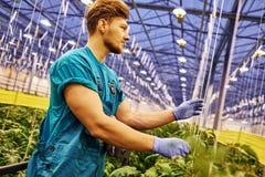 Agricoltore amichevole che lavora alla piattaforma idraulica dell'elevatore a forbice in serra Immagini Stock