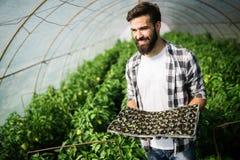 Agricoltore amichevole sul lavoro in serra Immagine Stock