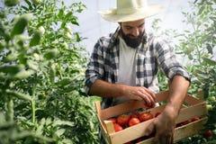Agricoltore amichevole sul lavoro in serra Fotografie Stock