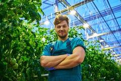 Agricoltore amichevole sul lavoro in serra Immagini Stock