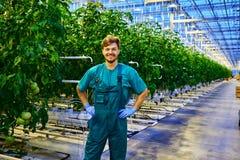 Agricoltore amichevole sul lavoro in serra Immagini Stock Libere da Diritti