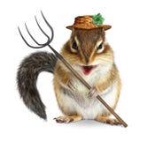Agricoltore animale divertente, scoiattolo con la forca e cappello isolato sopra Fotografie Stock Libere da Diritti