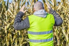 Agricoltore ansioso sul campo di grano freddo Immagini Stock Libere da Diritti