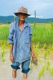 Agricoltore anziano che pianta riso Fotografie Stock