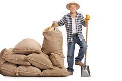 Agricoltore anziano con la pala accanto al mucchio dei sacchi della tela da imballaggio Fotografia Stock