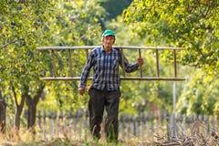 Agricoltore anziano con la scala di legno Fotografie Stock