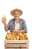 Agricoltore anziano con una cassa piena delle pere isolate Fotografie Stock