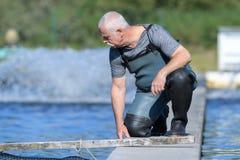 Agricoltore anziano del pesce che controlla gli animali Immagini Stock