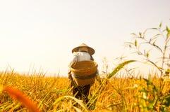 Agricoltore anziano indonesiano alle risaie dorate Immagine Stock Libera da Diritti