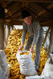 Agricoltore anziano nel suo granaio del mais Fotografie Stock