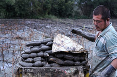 Agricoltore asiatico Fotografia Stock Libera da Diritti