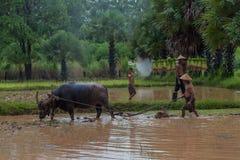 Agricoltore asiatico in campagna facendo uso del bufalo all'aratura per ric Fotografie Stock Libere da Diritti