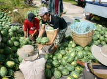 Agricoltore asiatico, campo di agricoltura, vietnamita, anguria Fotografie Stock
