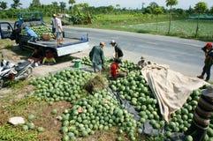 Agricoltore asiatico, campo di agricoltura, vietnamita, anguria Fotografia Stock