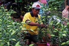 Agricoltore asiatico che lavora al giardino del giglio Immagine Stock Libera da Diritti
