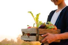 Agricoltore asiatico con i prodotti di verdure sorridenti della tenuta del fronte al tramonto Fotografie Stock Libere da Diritti