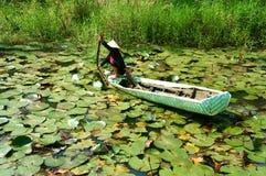 Agricoltore asiatico, ninfea della scelta, alimento vietnamita Fotografia Stock