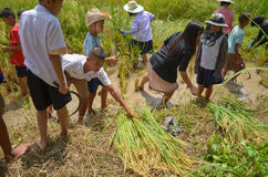Agricoltore asiatico tradizionale Fotografie Stock Libere da Diritti