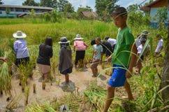 Agricoltore asiatico tradizionale Fotografia Stock Libera da Diritti