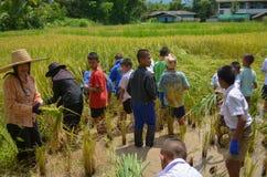 Agricoltore asiatico tradizionale Fotografia Stock