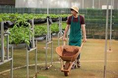 Agricoltore asiatico Working alla serra Fotografia Stock Libera da Diritti
