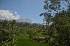 Agricoltore Bali Immagini Stock Libere da Diritti
