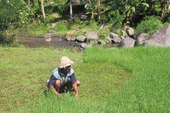 Agricoltore in Bali Indonesia Fotografia Stock
