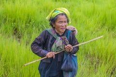 Agricoltore birmano nel Myanmar Fotografia Stock Libera da Diritti