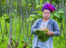 Agricoltore birmano nel Myanmar Immagine Stock Libera da Diritti