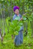 Agricoltore birmano nel Myanmar Immagine Stock