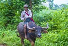 Agricoltore birmano nel Myanmar Immagini Stock