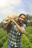 Agricoltore brasiliano del caffè alla piantagione di caffè Fotografie Stock