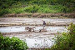 Agricoltore cambogiano in un giacimento del riso Fotografia Stock Libera da Diritti