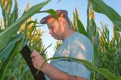 Agricoltore in campo di mais Fotografia Stock