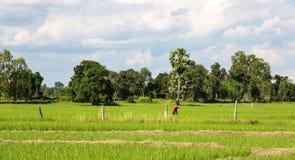 Agricoltore in campo di mais , la Tailandia Fotografia Stock Libera da Diritti
