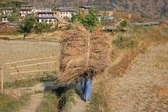 Agricoltore Carries Load del Bhutanese di grano, retrovisione Immagini Stock Libere da Diritti